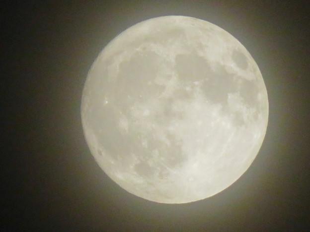 落合公園から見た薄曇りの中秋の満月(2018年9月24日) - 7