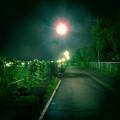 Photos: SX730 HS:トイカメラ風で撮影した夜の街灯 - 3