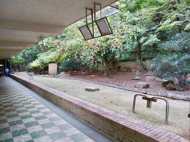 ネットが完全に取り払われてた東山動植物園バードホール(2018年10月21日)