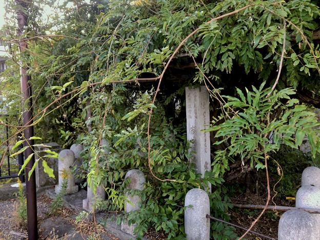 藤棚だけが残されてた旧・清流亭(2018年10月) - 3