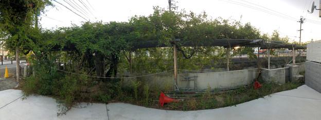 藤棚だけが残されてた旧・清流亭(2018年10月) - 7:パノラマ