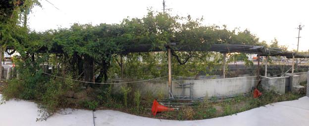 藤棚だけが残されてた旧・清流亭(2018年10月) - 8:パノラマ