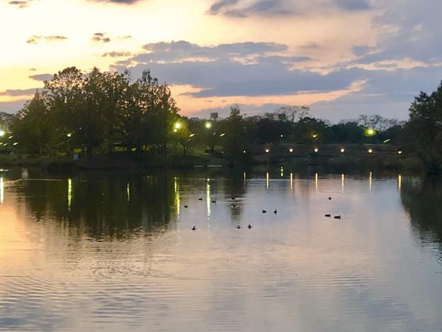 夕暮れ時の落合池 - 1