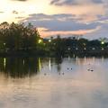 写真: 夕暮れ時の落合池 - 1