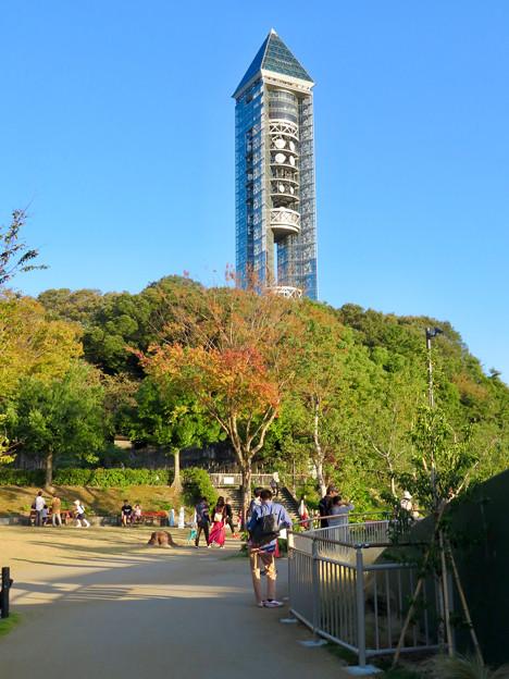 東山動植物園(2018年10月) - 7:紅葉し始めた木々と東山スカイタワー