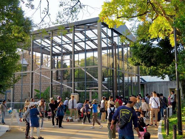 東山動植物園(2018年10月) - 11:沢山の人が集まってたフクロテナガザル舎