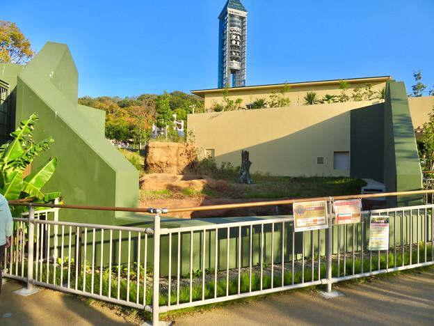 東山動植物園:新ゴリラ・チンパンジー舎 - 2
