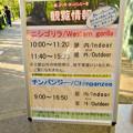 Photos: 東山動植物園:新ゴリラ・チンパンジー舎 - 4(観覧時間、ゴリラは観覧時間制限あるので注意!)