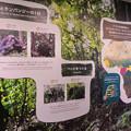 Photos: 東山動植物園:新ゴリラ・チンパンジー舎 - 9(ゴリラとチンパンジーの1日ほか)