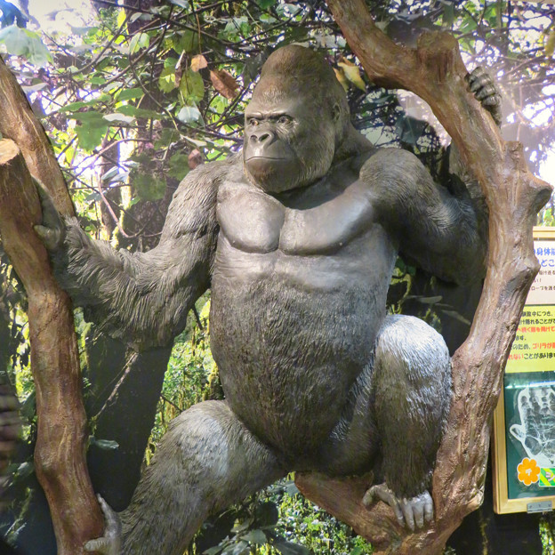 東山動植物園:新ゴリラ・チンパンジー舎 - 11(ゴリラ像)