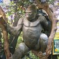 Photos: 東山動植物園:新ゴリラ・チンパンジー舎 - 11(ゴリラ像)