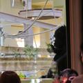 Photos: 東山動植物園:新ゴリラ・チンパンジー舎 - 13(チンパンジー)