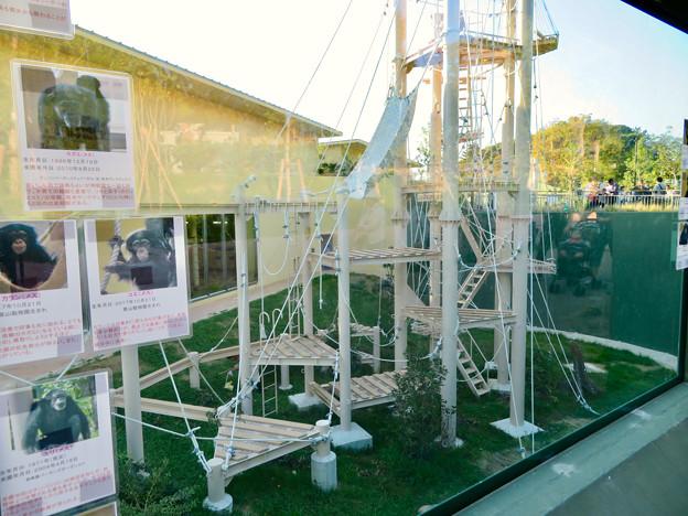 東山動植物園:新ゴリラ・チンパンジー舎 - 45