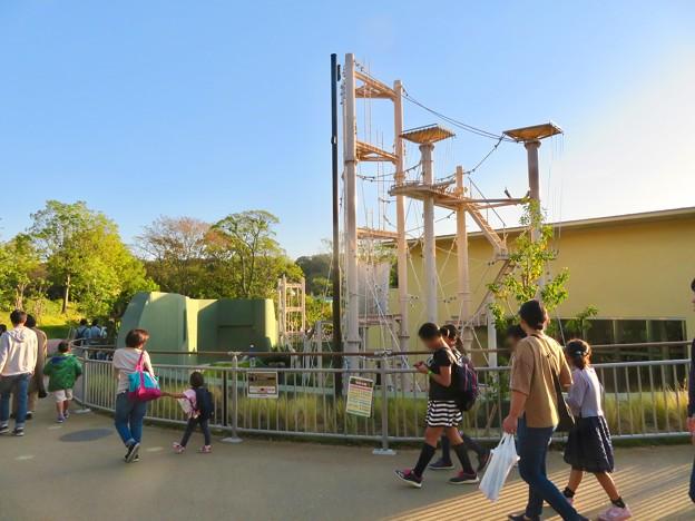 東山動植物園:新ゴリラ・チンパンジー舎 - 46