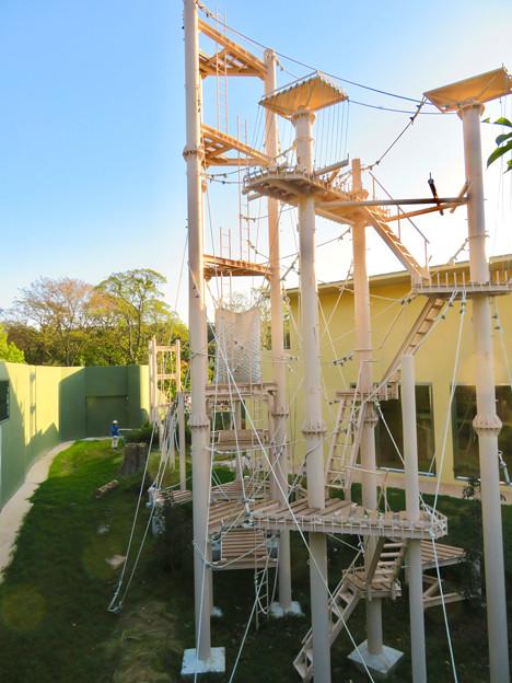 東山動植物園:新ゴリラ・チンパンジー舎 - 47