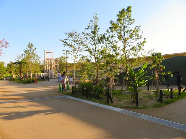 東山動植物園:新ゴリラ・チンパンジー舎 - 61