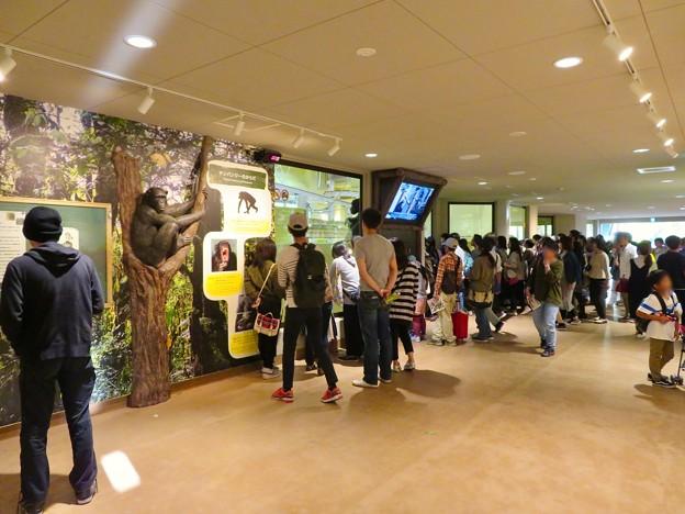 東山動植物園:新ゴリラ・チンパンジー舎 - 12(たくさんの人で賑わうチンパンジー舎前)