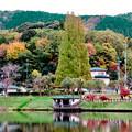 1週間経ったけどあまり紅葉は進んでなかった、定光寺公園(2018年11月18日) - 3