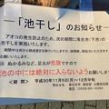 Photos: 水抜き(池干し)された落合公園の池(2018年11月) - 14