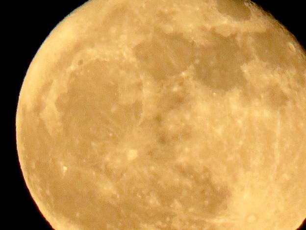 昇ったばかりで煌々と輝く十六夜の月(2018年11月24日) - 5