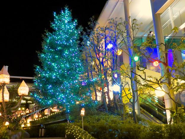 星が丘テラスのクリスマス・イルミネーション 2018 No - 10