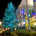 Photos: 星が丘テラスのクリスマス・イルミネーション 2018 No - 10