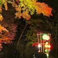 Photos: 東山動植物園 紅葉ライトアップ 2018 No - 1