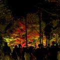 Photos: 東山動植物園 紅葉ライトアップ 2018 No - 4