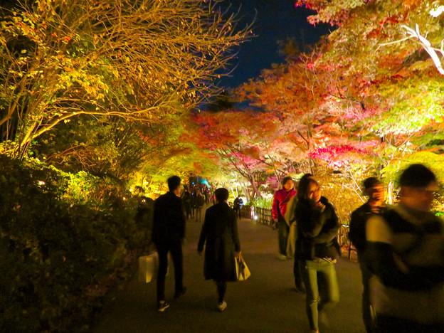 東山動植物園 紅葉ライトアップ 2018 No - 21