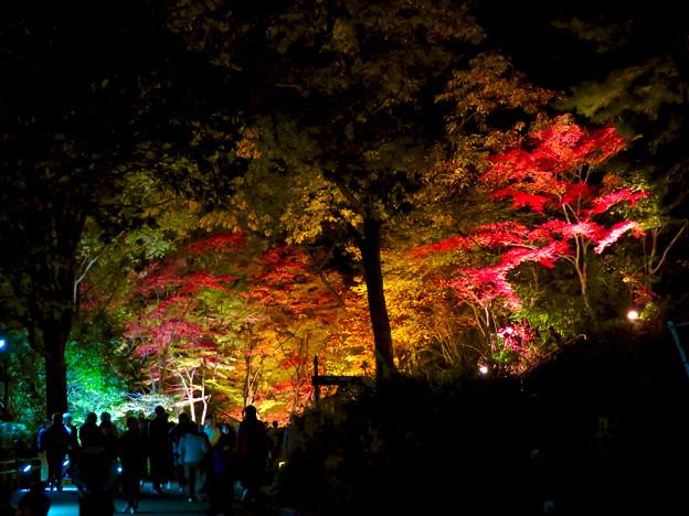 東山動植物園 紅葉ライトアップ 2018 No - 25