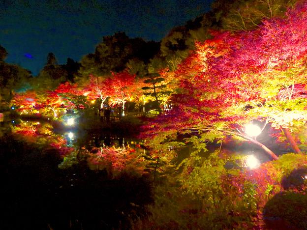 東山動植物園 紅葉ライトアップ 2018 No - 29