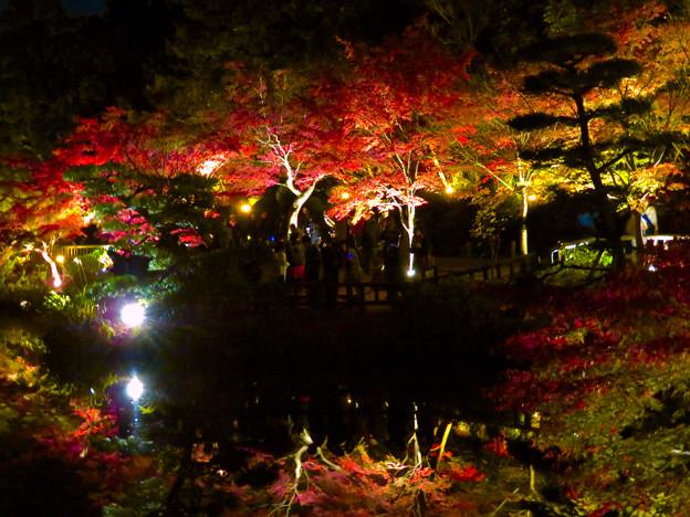 東山動植物園 紅葉ライトアップ 2018 No - 30