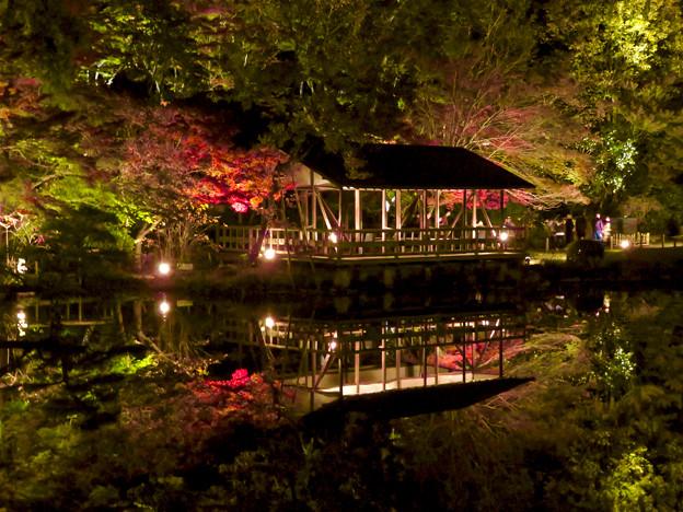 東山動植物園 紅葉ライトアップ 2018 No - 32