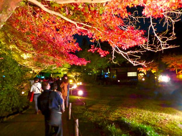 東山動植物園 紅葉ライトアップ 2018 No - 35