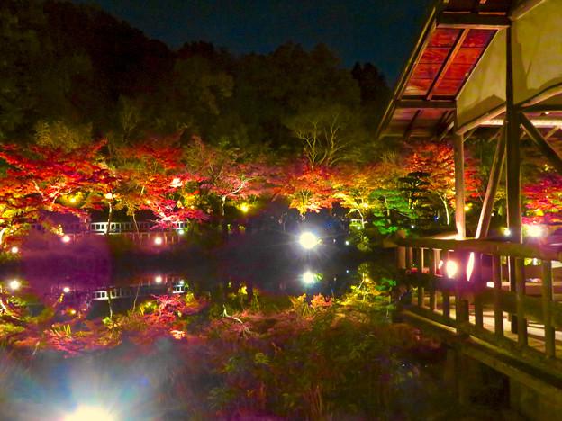 東山動植物園 紅葉ライトアップ 2018 No - 36