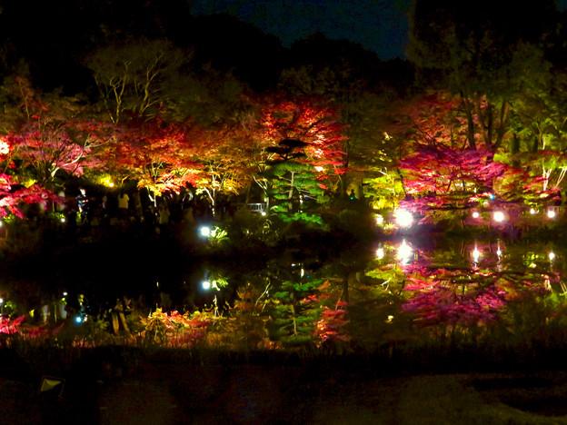 東山動植物園 紅葉ライトアップ 2018 No - 37