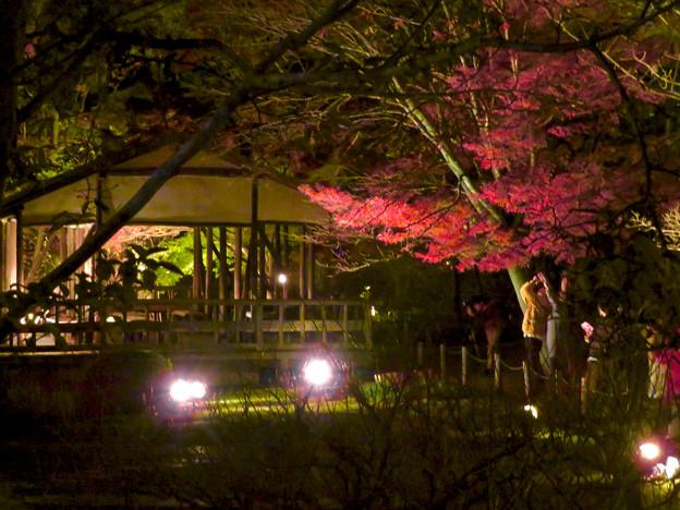 東山動植物園 紅葉ライトアップ 2018 No - 41