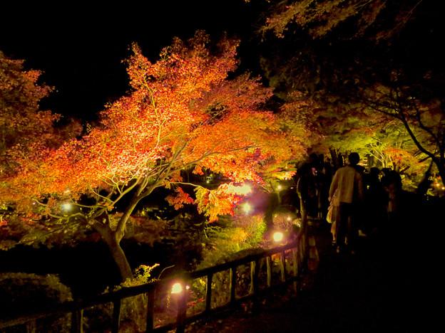 東山動植物園 紅葉ライトアップ 2018 No - 44