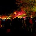 東山動植物園 紅葉ライトアップ 2018 No - 45