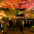 東山動植物園 紅葉ライトアップ 2018 No - 46
