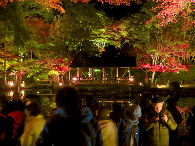 東山動植物園 紅葉ライトアップ 2018 No - 47