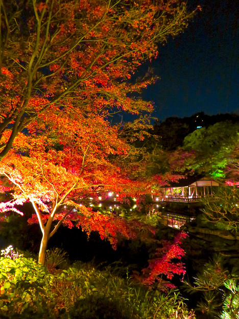 東山動植物園 紅葉ライトアップ 2018 No - 49