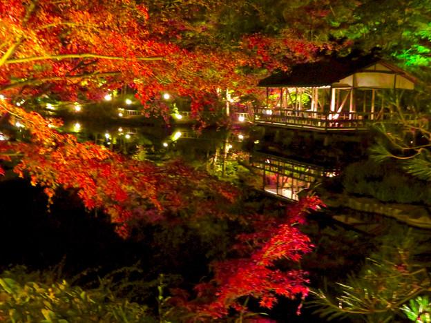東山動植物園 紅葉ライトアップ 2018 No - 50