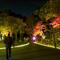 東山動植物園 紅葉ライトアップ 2018 No - 51
