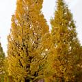 写真: 秋のノリタケの森 - 1
