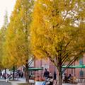 写真: 秋のノリタケの森 - 3