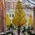 写真: 秋のノリタケの森 - 17