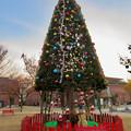 Photos: 秋のノリタケの森 - 19:クリスマスツリー