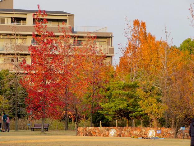写真: 秋のノリタケの森 - 26