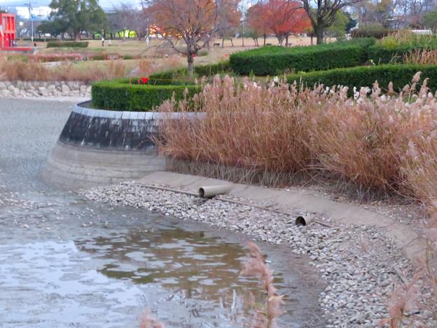 水抜きした状態の秋の落合公園 - 10